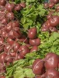 Radish. A pile of freshness radish Stock Photo