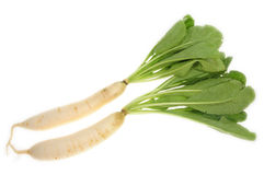 Radish Plants Stock Photos