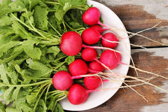 Radish in a plate. Fresh red radishes with tops lying in white plate Royalty Free Stock Photos