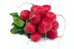 Radish - Raphanus sativus Stock Images