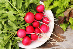 Radish red in the white plate. Fresh radishes with green tops on a background of grass and leaves of lettuce Stock Photo