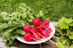 Radish red in the white plate. Fresh radishes with green tops on a background of grass and leaves of lettuce Royalty Free Stock Photography
