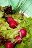Radish and salad Royalty Free Stock Photos
