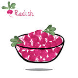 Radish on salad bowl. Hand drawn watercolor. Radish on salad bowl isolated on white background. Hand drawn watercolor. Vector illustration Stock Photography
