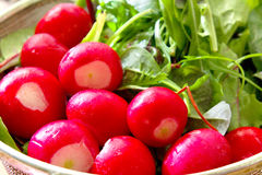 Radish and salad close up. Fresh radish and various salad leaves background Royalty Free Stock Images