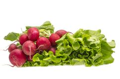 Radish and salad Stock Photos