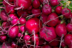 Radish for sale on market. Agriculture background. Top view. Close-up. Radish for sale on market. Agriculture background. Close-up. Top view Royalty Free Stock Photography