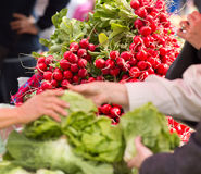 Radish on sale. Ripe, fresh radish in bundles on pile on green market Stock Images