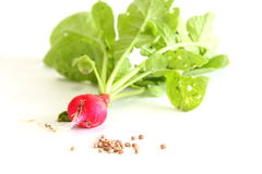 Radish and Seeds. Cherry Belle radish with seeds on white Stock Photo