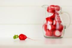 Radish. Small radish on white background Stock Image