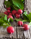 Radish. Some fresh ripe radishes on old wooden table Royalty Free Stock Photography