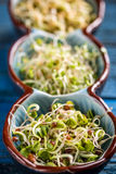 Radish sprout. In small bowl, close up Stock Image
