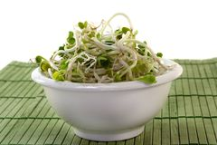 Radish sprouts. Fresh radish sprouts in a small bowl Stock Photography
