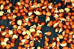 Radish sprouts Royalty Free Stock Photo