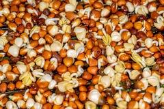 Radish sprouts stock image