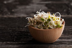Radish Sprouts in a Wooden bowl. Close-up of Radish Sprouts in a Wooden bowl Royalty Free Stock Photo