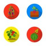 Radish, strawberry, watermelon, eggplant.Plant set collection icons in flat style vector symbol stock illustration web. Royalty Free Stock Photos