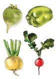 Radish sweet pepper figure radish turnip root vegetable Royalty Free Stock Images