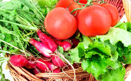 Radish, tomato, lettuce, basket Royalty Free Stock Photos