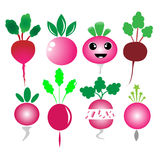 Radish vector Royalty Free Stock Images