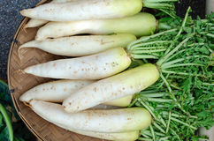 Radish. Is vegetable in asia Stock Images
