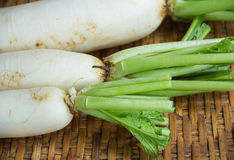 Radish is vegetable. In asia Royalty Free Stock Images