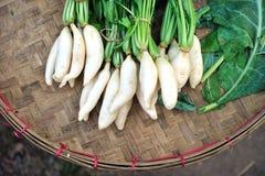 Radish vegetable thai Royalty Free Stock Image