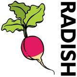 Radish vermelho Fotografia de Stock Royalty Free