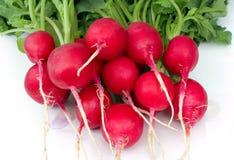 Radish vermelho imagem de stock