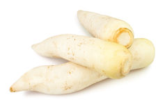 Radish white Royalty Free Stock Image