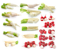Radish  on white background. Fresh radish  on white background Stock Image