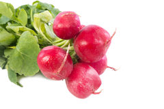 Radish on white background. Fresh raw spicy  radish on white background Stock Images