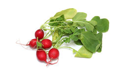 Radish in a white background Royalty Free Stock Photos