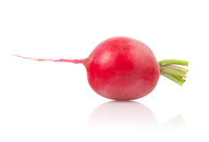 Radish on White Background. Single Radish  on White Background Stock Photo