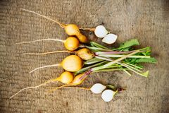 Radish on wooden background. Bunch of yellow radish on wooden background, fresh harvest, green vegetables Royalty Free Stock Image