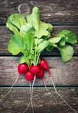 Radish on wooden background. Fresh ripe radish on old wooden background Royalty Free Stock Photos