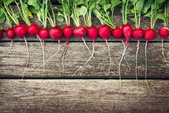 Radish on wooden background. Fresh ripe radish on old wooden background Royalty Free Stock Image