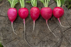 Radish on the wooden background. Ripe red radish  lying on a wooden background Royalty Free Stock Photo