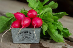Radish on the wooden background. Ripe red radish  lying in metall basket on a wooden background Royalty Free Stock Photos