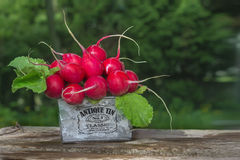 Radish on the wooden boards. Ripe red radish  lying in metall basket on a wooden boards Stock Photos