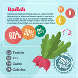 Radishe infographics and vitamins in a flat style. Vector illustration. EPS 10 Royalty Free Stock Images