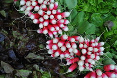 Radishes. On a french market stall Royalty Free Stock Photos