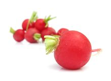 Radishes. The radish (Raphanus sativus) is an edible root vegetable of the Brassicaceae family that was domesticated in Europe in pre-Roman times. They are grown Royalty Free Stock Images