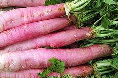 Radishes. A pile of radishes in a vegetables market Stock Images
