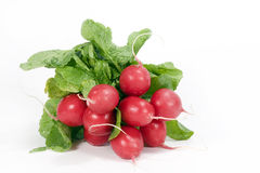 Radishes Fotografia de Stock
