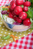 Radishes Royalty Free Stock Photos