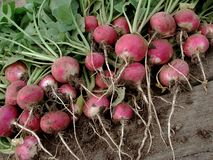 Radishes. Bunch of fresh radishes with tops on old wooden background Royalty Free Stock Images