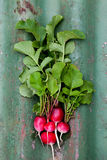 Radishes Royalty Free Stock Images