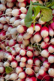 Radishes 2 Foto de Stock Royalty Free