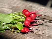 Radishes Fotografia de Stock Royalty Free